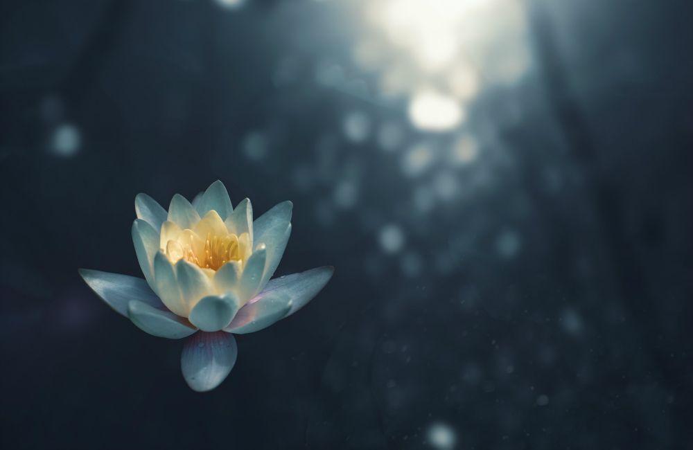 One Practice Samadhi